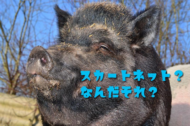 罠を知らない猪