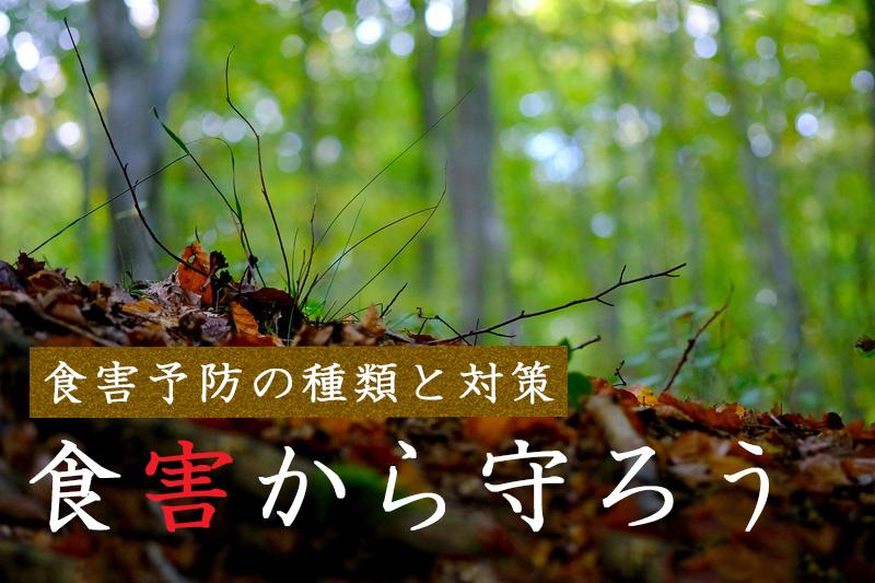 森林を守る