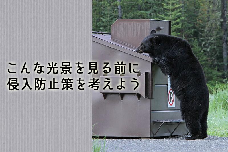 ゴミをあさるクマ