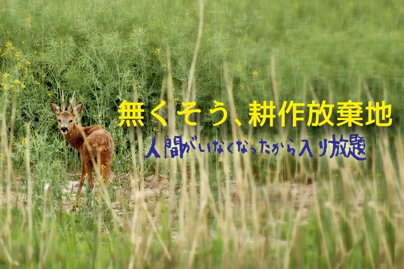 耕作放棄地に入り込んだ鹿