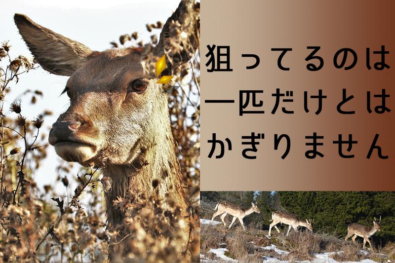 群れで狙う鹿たち